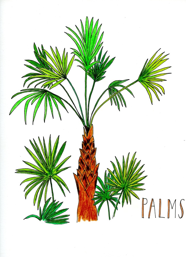 Palms, from Artists Book: What's In Florida