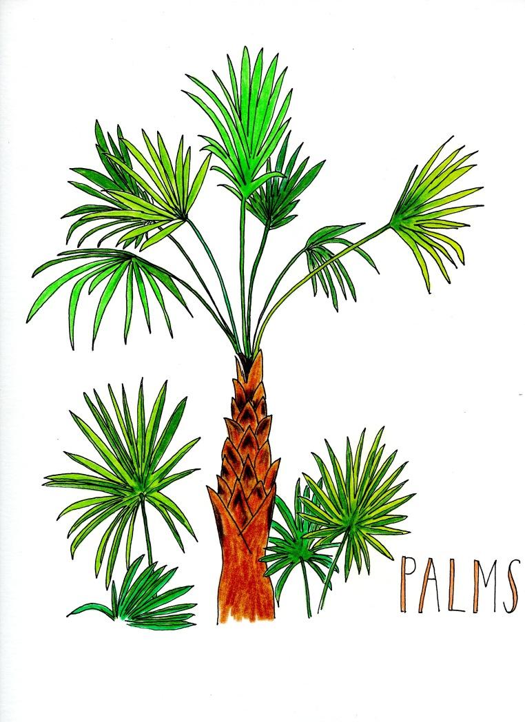 palms001