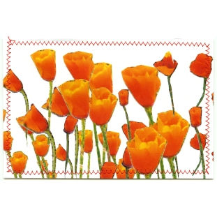 CA_poppies