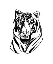 Tiger for Ezra & Edie