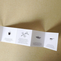 Illustrations for accordion fold booklet for Blue Bottle Coffee